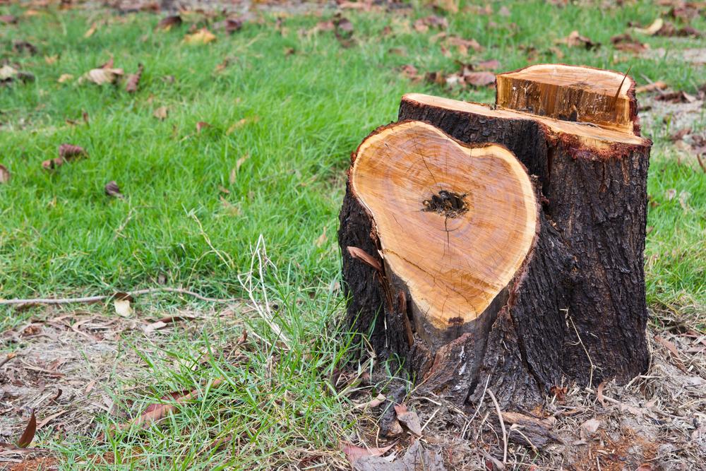 rognage-souche-arbre